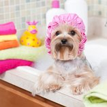 Healthy Pets: Wellness & Grooming