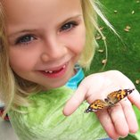 Learn About Butterflies Day Collection