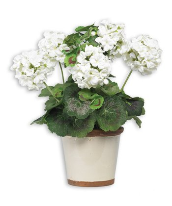 White Geranium & Ceramic Pot