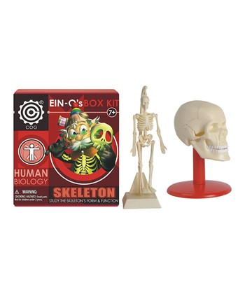 Skeleton Model Box Kit