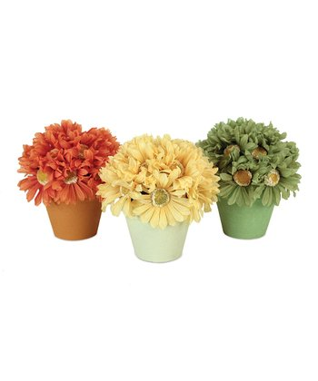 Gerbera Pot Set