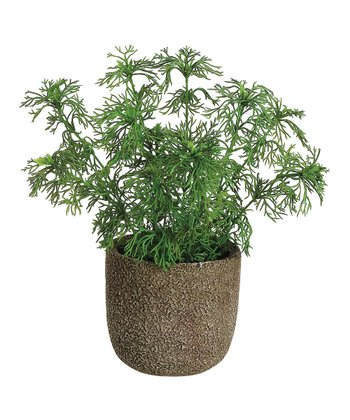 Green Potted Dill