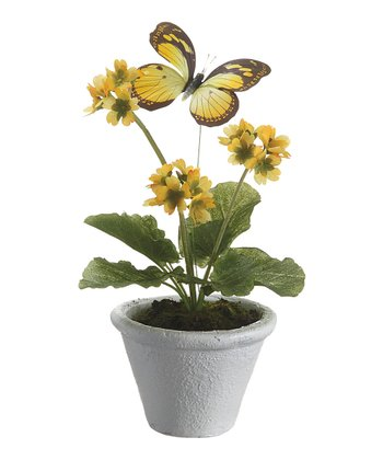 Yellow Primula & Butterfly Potted Arrangement