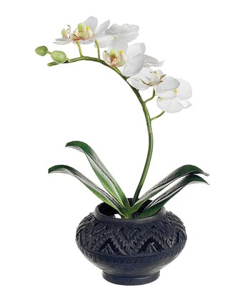 White Phalaenopsis Orchid 10'' Potted Floral Arrangement