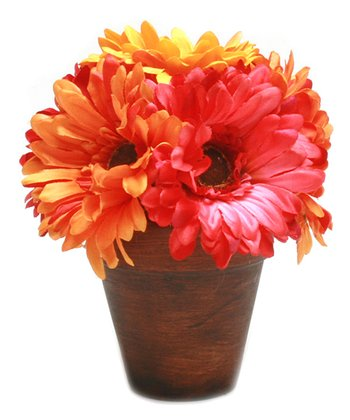 Potted Gerber Daisy Set