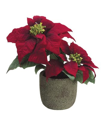 Poinsettia Cement Pot Arrangement
