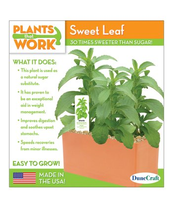 Sweet Leaf Plant Cube Kit