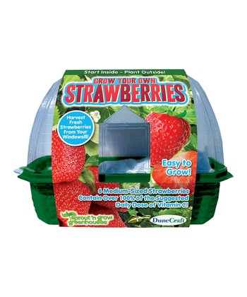 Grow Your Own Strawberries Plant Kit - Set of Three