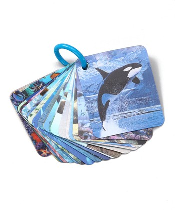 Marine Animals 3-D Flash Card Set