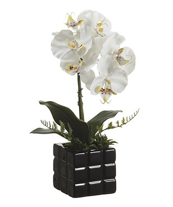 White & Yellow Phalaenopsis Orchid 16'' Floral Arrangement