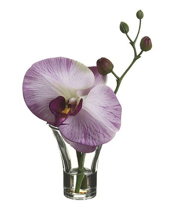 Purple & White Phalaenopsis Orchid 6'' Potted Floral Arrangement