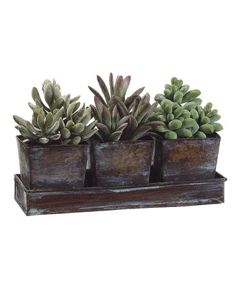 Green Potted Plant Arrangement Tray