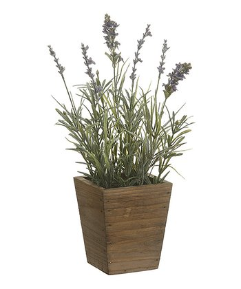 13'' Potted Lavender Arrangement