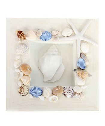 Conical Seashell Shadowbox