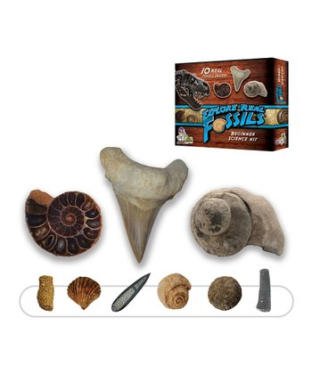 Basic Fossil Kit