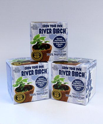 Grow Your Own River Birch Kit - Set of Three