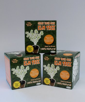 Grow Your Own Elm Tree Kit - Set of Three