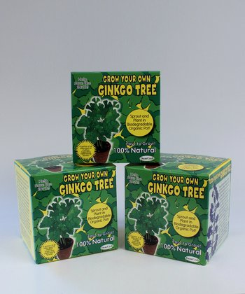 Grow Your Own Ginkgo Tree Kit - Set of Three
