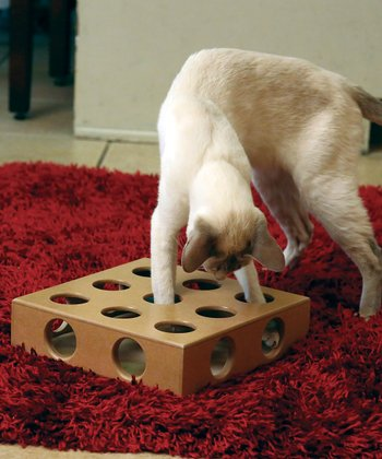 Peek 'n' Play Cat Puzzle Set
