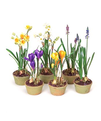Hyacinth, Crocus & Narcissus Pot Set