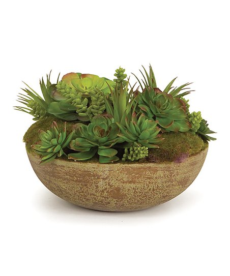Mixed Succulent Bowl Arrangement