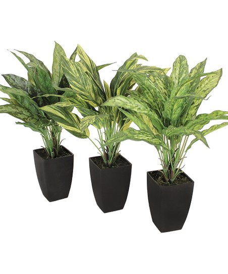 Aglaonema & Tradescantia Pot - Set of Three